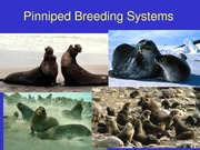 9. Pinniped_Social_Systems_2013