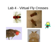 DeNegre+Lab+4_virtualfly
