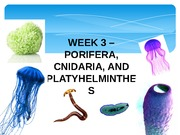 Week 3 PPT (Porifera, Cnidaria, and Platyhelminthes)