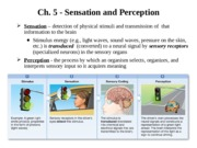 p100 ch5 sensation perception f15(1)