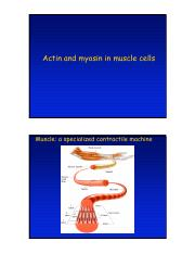 MuscleContractionLecture.pdf