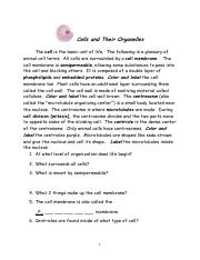 Printables Cells And Their Organelles Worksheet Answers cells and their organelles worksheet of 9 6h ocl 8 pages biology unit 4 coloring 2017 pdf