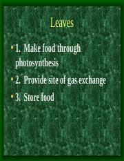 Leaves.ppt