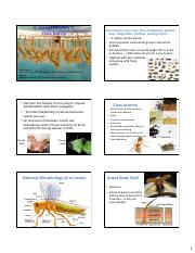 6. Animal Diversity 2 Aquatic Insects.pdf
