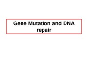 Lect13-GeneMutationDNARepair
