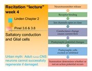 Recitation week 4 glial cells