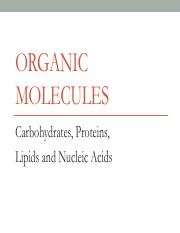 Introduction to Organic Molecules (2)