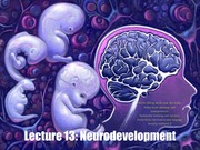 2_13M+2_15W Lecture_13_Development_of_the_Nervous_System