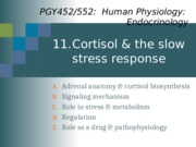 Topic 11-Cortisol_2016-Notes.pptx