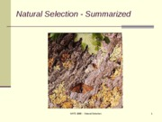Lecture 17 Summary of Natural Selection