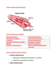 Intro to Muscle Fibre Notes