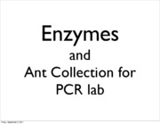 Enzymes and Ant Collection E1a 2011