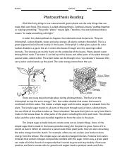 photosynthesis_reading.docx