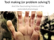 Fossil hominids hands and tools
