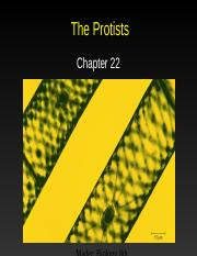 AP Ch. 22--The Protists
