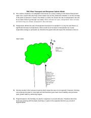 Plant Transport and Response.docx
