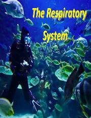 Lecture 3-Respiratory System.pdf