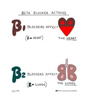 beta blocker actions