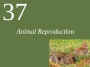 Ch37 Animal Reproduction