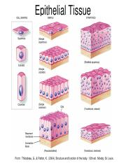ANAT 113 Week 2 Epithelial Tissue Chart Handout.pdf