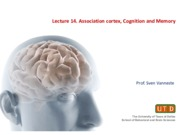 Lecture 14. Association Cortex and Cognition