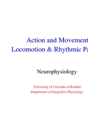 10 - Locomotion & Rhythmic Behaviors  - lecture slides