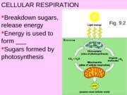 bio 110 cellular respiration