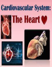 CV Heart Class Notes Part 1(1).pdf
