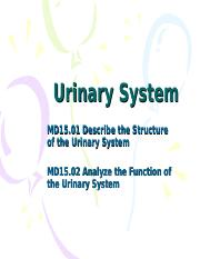 Urinary_System_Slides