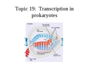 Topic 19, transcription in prokaryotes