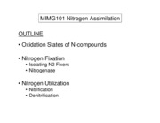 MIMG101%20Lecture%2012%20Nitrogen%20Assimilation%20Overheads
