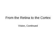 From the Retina to the Cortex