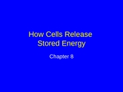 ch08_lecture-How Cells Release Stored Energy