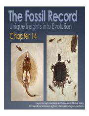 Spring 2016 Lecture 25 Macro 2_Insights from fossils.pdf