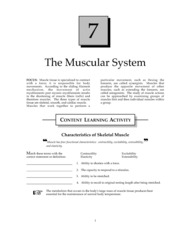 Muscular System Study Guide