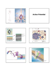 action potential lecture