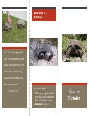 gopher tortoise.pptx