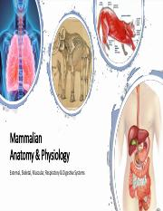 Mammalian Anatomy- External, Skeletal, Muscular, Respiratory, Digestive.pdf