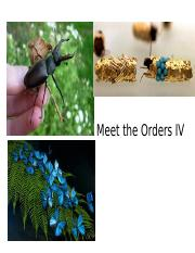 MEET THE ORDERSDS IV