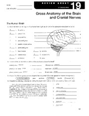 Exercise 17 gross anatomy of the brain and cranial nerves