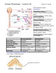 Human Physiology Lecture 20.pdf