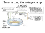 Lecture 6 voltage clamp experiments 020414