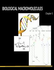 05S Biological Macromolecules.ppt