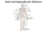 Axial and Appendicular Skeleton_upload