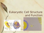 Lecture 4-Euk cells
