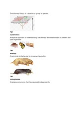 Evolutionary history of a species or group of species.