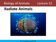 Lecture 13 Radiate Animals