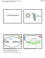 Lecture 5 - DNA Methylation.pdf