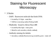 FluorescentStainingS090