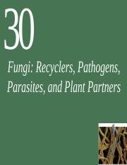 Ch30_Lecture-Fungi.ppt